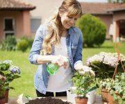 آشنایی با 5 اصل اولیه نگهداری از گل و گیاه