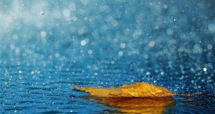نم نم باران