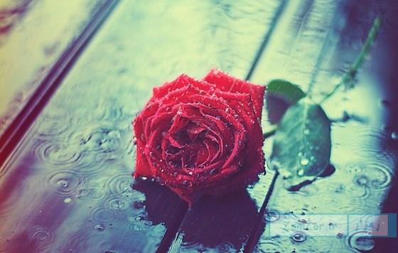 غصه میسوزد مرا ، باران ببار (شعر)