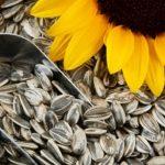 ۵ فایده درمانی تخمه آفتابگردان