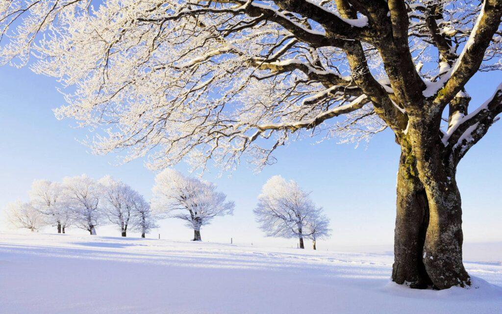 زمستان زیبا