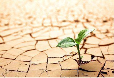 سبزه در خشکی بیابان