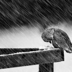 دلم چون غنچه خو کرده ست با سر در گریبانی  … (بهادر یگانه)