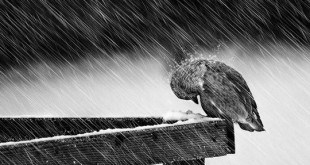 عاشقونه زیر بارون