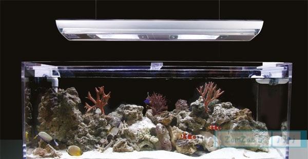 آشنایی با مهمترین پارامترهای نور در آبزی دان (آکواریوم)