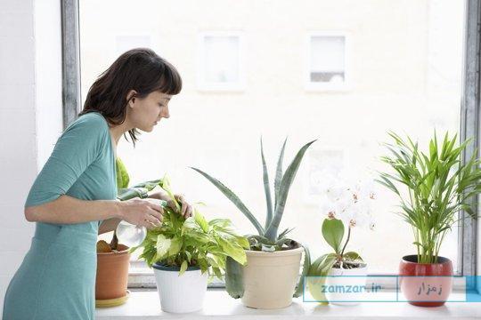 پرورش گیاه آپارتمانی