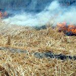۵ دلیل بر مضر بودن سوزاندن کاه در مزارع