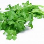 گشنیز، سبزی آرامش بخش و ضد تشنگی