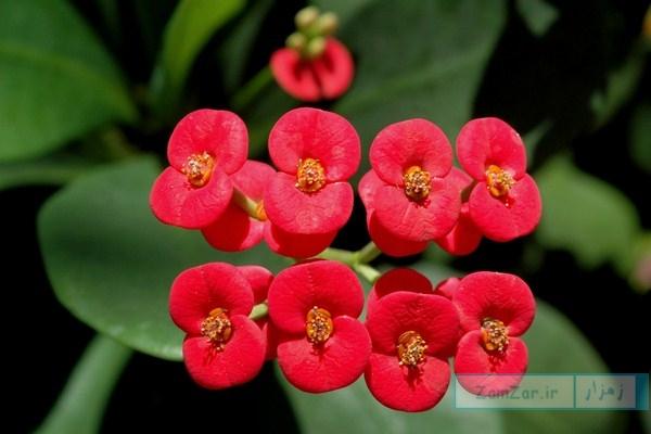 تصاویری از گل مرجان مینیاتوری