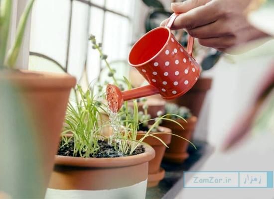 معرفی 6 راه برای شاداب کردن گیاهان پژمرده