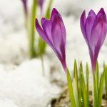 شعرهایی زیبا درباره برف