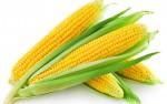 ذرت، گیاه آرام کننده دردهای دستگاه ادراری