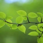 متن های زیبا درباره روز درختکاری