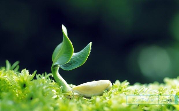 اس ام اس و پیامک روز کشاورزی و دهداری (۱ دی )