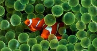 دلقک ماهی آب شور