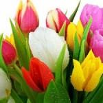 پرورش و نگهداری گل لاله