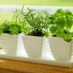 شرایط نگهداری از گیاهان در آپارتمان ها