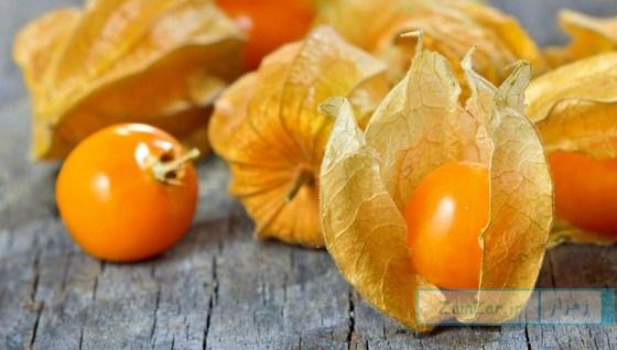 مروری بر خواص میوه فیسالیس
