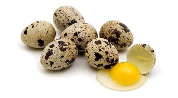 تخم بلدرچین