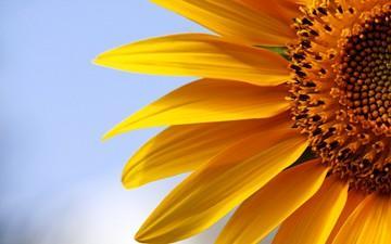 تاثیر گل بر روحیه انسان