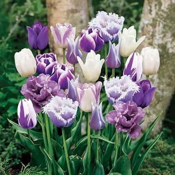 پرورش و نگهداری «گل لاله»