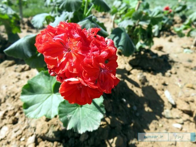 بهار 95 در کرکوند