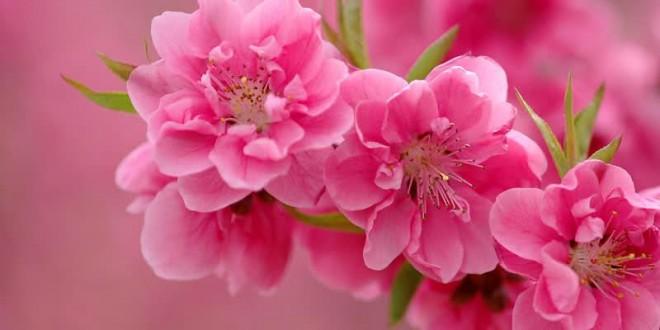 بهار زیبا