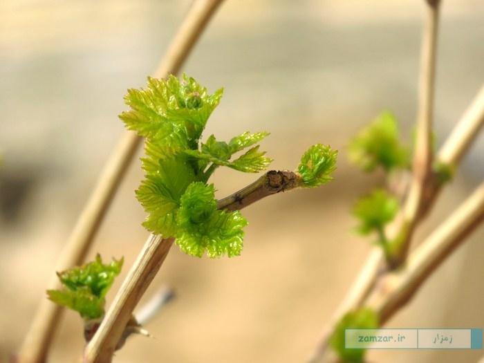 بهار کرکوند