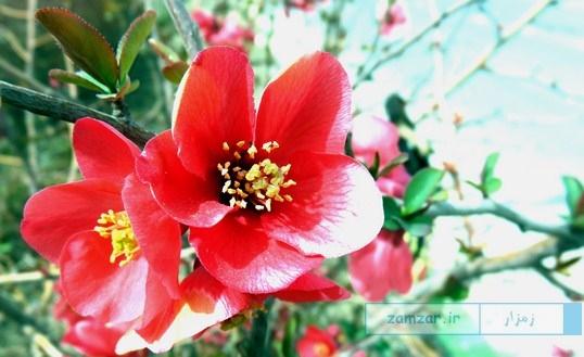 بهار در شهر کرکوند