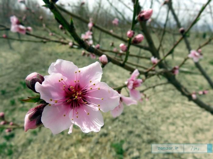 زیبایی های بهار در کرکوند