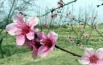 بهار را بهانه کن (شعر)