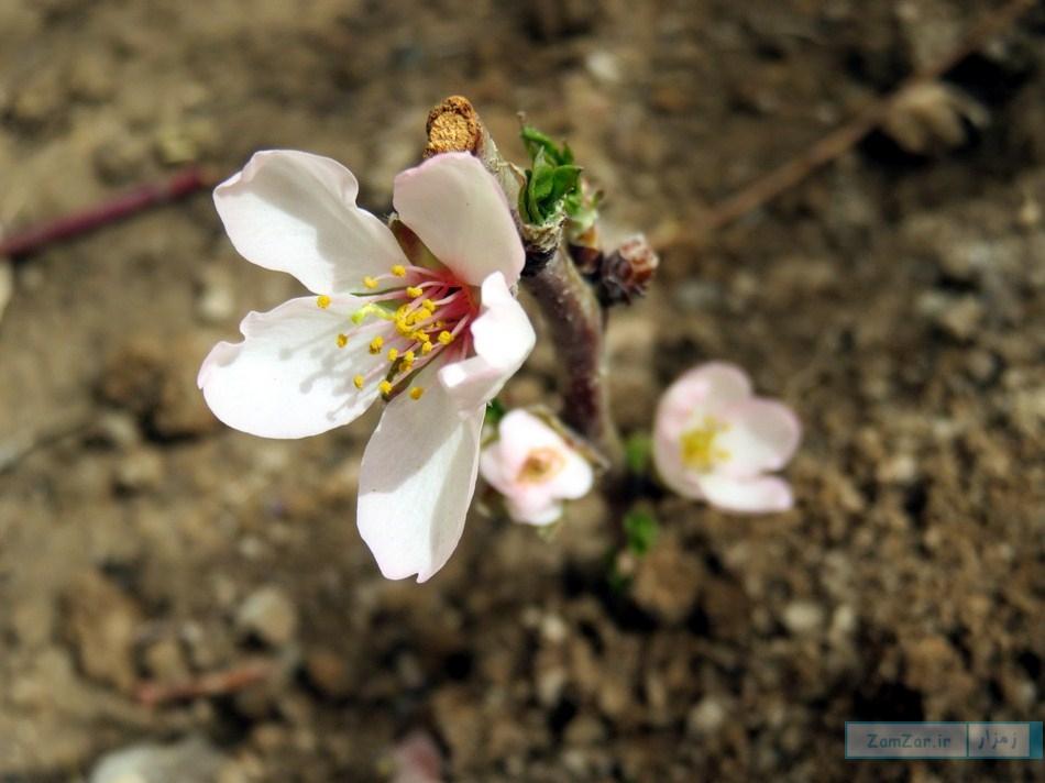 (عکس روز) لبخند بهار ...