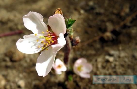 (عکس روز) لبخند بهار