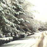 عکسهایی از بارش برف ۸۸ کرکوند (بوستان ملت)