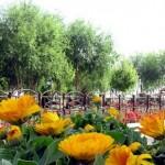 بوستان امامزاده حلیمه خاتون (س) کرکوند + تصاویر