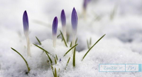به ماه دی، گلستان گفت با برف (شعر)