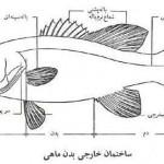 ماهی و اختصاصات آن