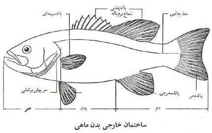ساختمان بدن ماهی ها