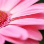 ۱۵ حقیقت جالب در مورد گلها