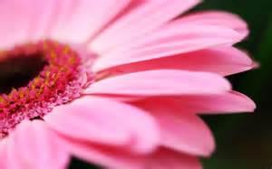 حقیقت گل ها