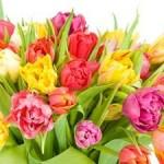 نقش گل در سلامت روانی انسان
