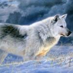 متن های زیبا و فلسفی درباره گرگ