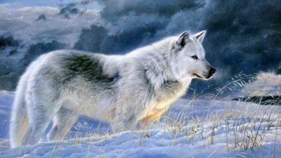 درباره گرگ