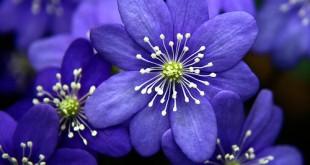 گل زیبا - حدیث