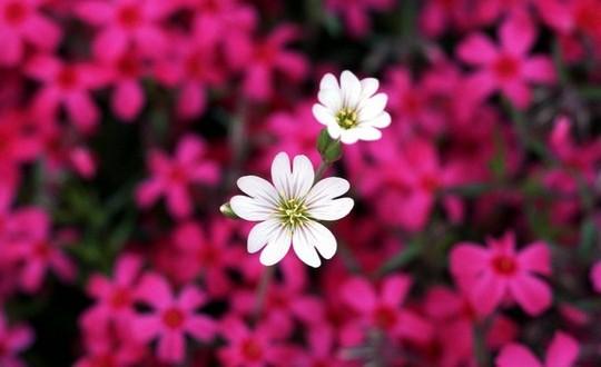 گل زیبا - شعر