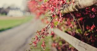 گل زیبای بهاری