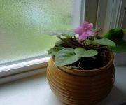 مزایای وجود گیاهان در خانه چیست؟