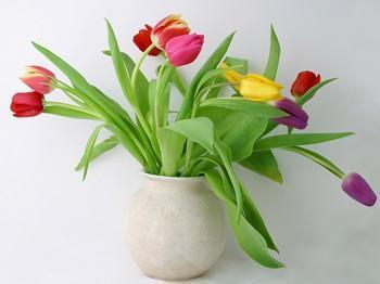 بهبود روحیه با تماشای گل ها