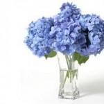 نکات مهم نگهداری از گلها و گیاهان بهاری در خانه