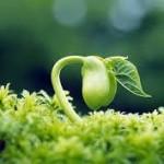 گیاهان موجوداتی اجتماعی اند !
